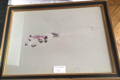 Gilles AILLAUD-Hippopotame-Crayon de couleurs,...