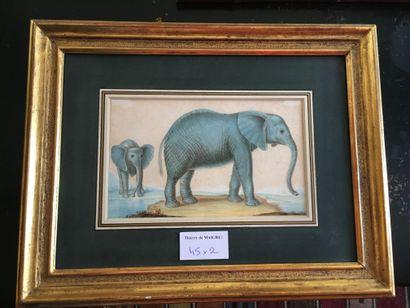 Ecole vers 1800-Deux éléphants-Mine de plomb,...