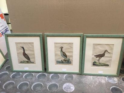 Oiseaux, 6 gravures couleurs; JOINT : 15aine...