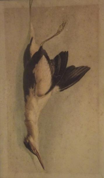 Oiseaux divers Trois natures mortes. Aquarelles...
