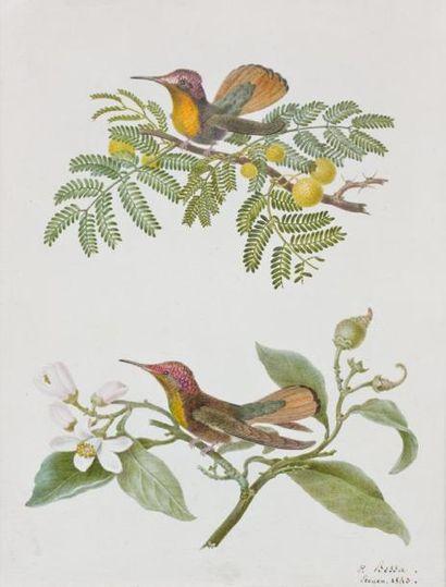 Pancrace BESSA (1772- 1846)