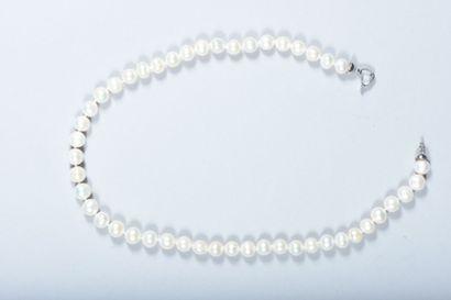 Collier choker de perles d'eau douce blanches....