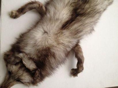 Echarpe en renard gris