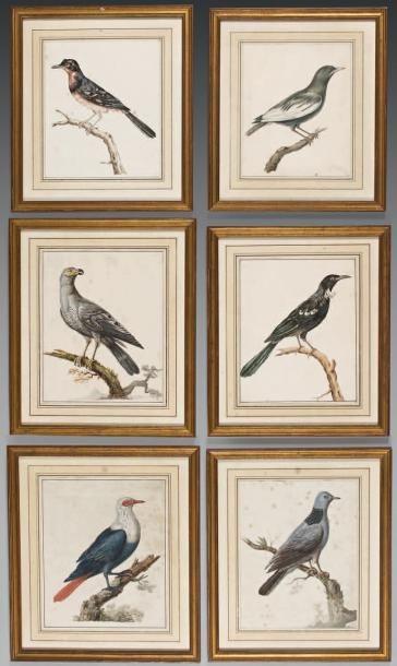 Suite de six dessins aquarellés figurant des oiseaux branchés. Dans des baguettes...