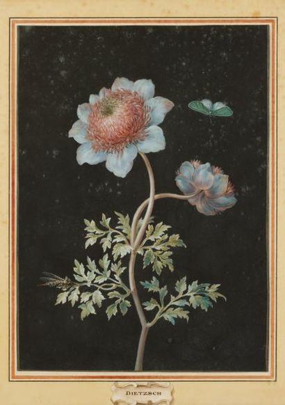 Attribué à Barbara Regina DIETZSCH (1706 - 1783)