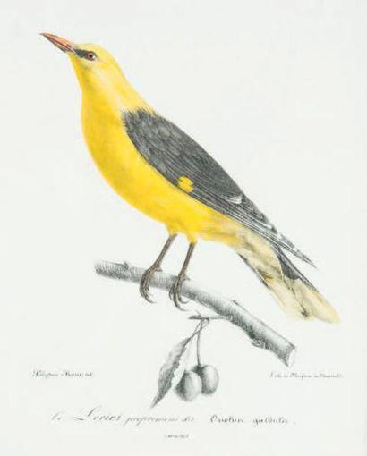[ORNITHOLOGIE]. ROUX (Polydore). Ornithologie...