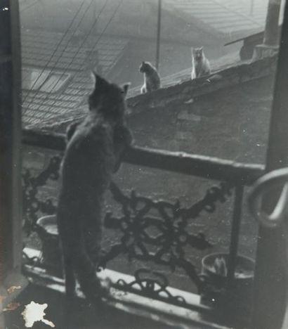 Réunion de chats, 1948 Tirage gélatino-argentique...