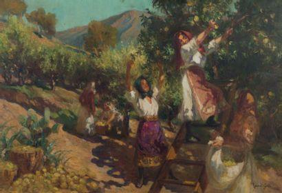 Lucien LAURENT-GSELL (1860 - 1944) La récolte des citrons Huile sur toile, signée...