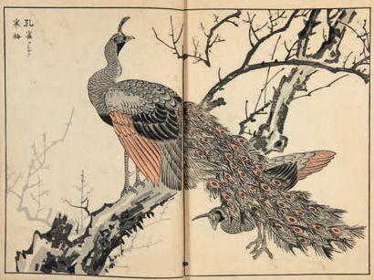 Maekawa BUNREI (1837 - 1917)