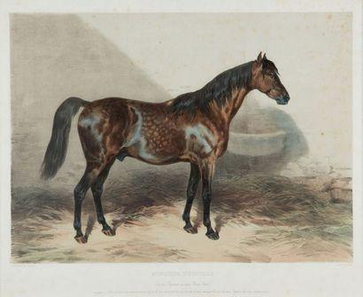 H.LALAISSE