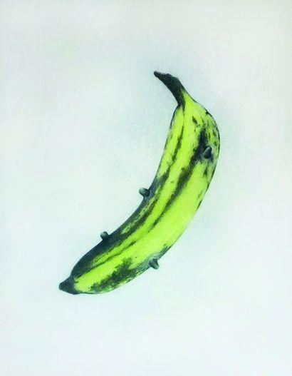 David MIGUEL (Né en 1974) Suck A Warhol,...