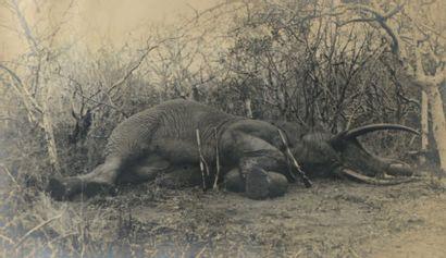 Photographie en noir et blanc. Éléphant mort....
