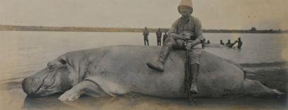 Photographie en noir et blanc. L'hippopotame....