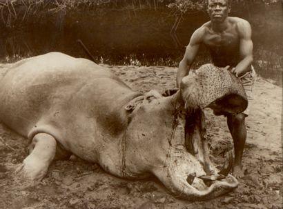 Photo en noir et blanc. L'hippopotame. 22...