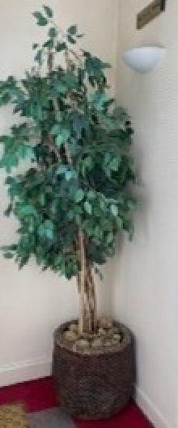 Pot en osier tressé contenant une plante...
