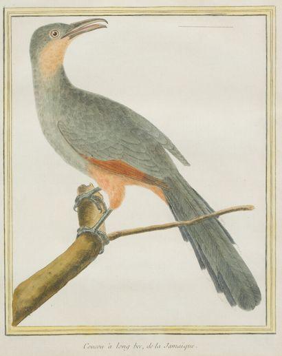 33. D'après MARTINET  Oiseaux  Paire de gravures en couleur.