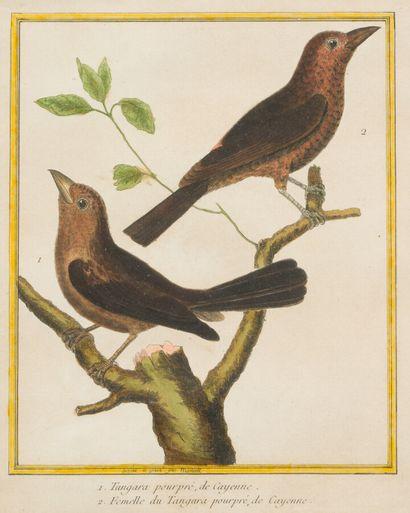 33. D'après MARTINET  Oiseaux  Paire de gravures...