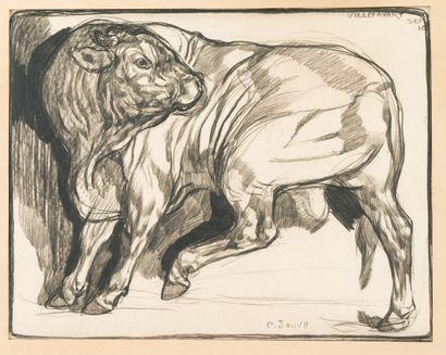 46. Paul JOUVE (1878-1973)  Boeuf, Villefavard...