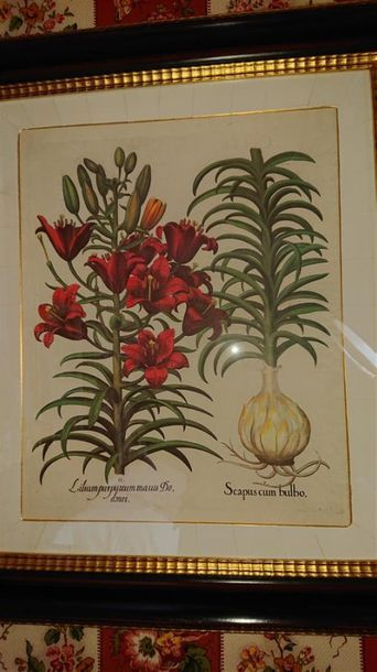 Paire de reproductions encadrées «Plantes»,...