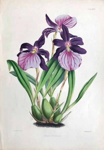 WARNER (Robert) et LINDEN (Jean-Jules) 2 illustrated books devoted to the ORCHIDES,...