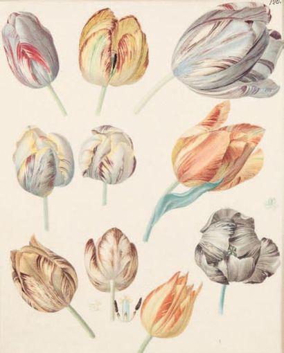 École FRANÇAISE du début du XIXe siècle Études de tulipes Crayon noir et aquarelle....