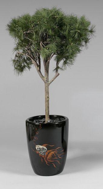 Deux pins simulés, dans des pots. Hauteur...