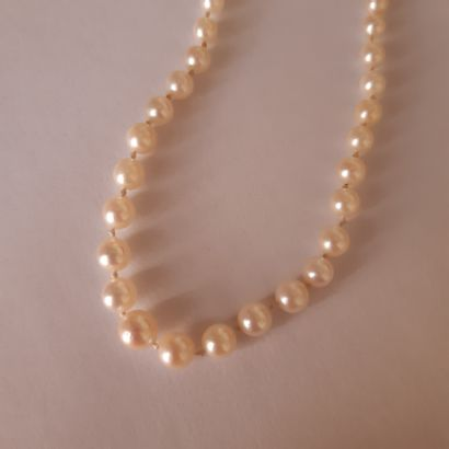 Necklace of pearls of culture in fall, the clasp in platinum 850 thousandths and...