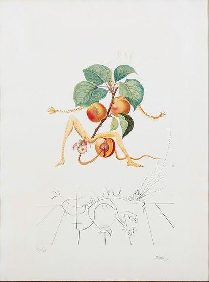D après Salvador DALI Abricot, 1969, lithographie...