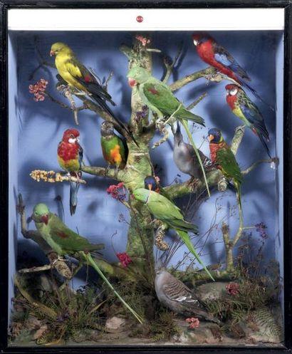Vitrine contenant douze oiseaux décoratifs...