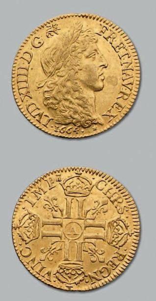 Louis d'or juvénile à la tête laurée. 1664....
