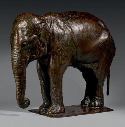 Rembrandt BUGATTI (1884-1916) Éléphant de l'Inde au repos, vers 1909-1910 Épreuve...
