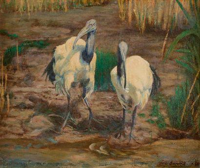 Rudolph SCHULZ-BOREK (1887-1983) Les Ibis...