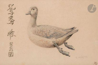 Édouard Paul MÉRITE (1867-1941) Canard mandarin...