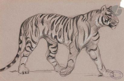 Armand POINT (1860-1932) Étude de tigre Crayon...