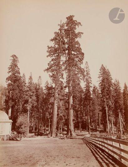 Charles L. Weed (1824-1903) Calaveras Grove,...