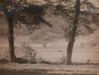 Josef Sudek (1896-1976) Les arbres dans la...
