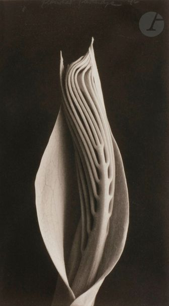 Rondal Partridge (1917-2015) Deux (2) épreuves...