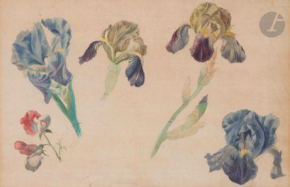 École française du XIXe siècle Étude de fleurs Aquarelle. 25 x 39,5 cm