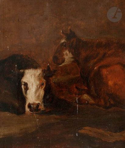 École hollandaise du XVIIIe siècle Étude de vache Panneau de chêne, deux planches,...