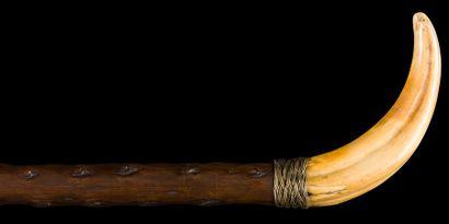Canne en bois noueux, prise en défense de...