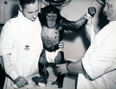 NASA Le singe Ham avant son voyage dans le...