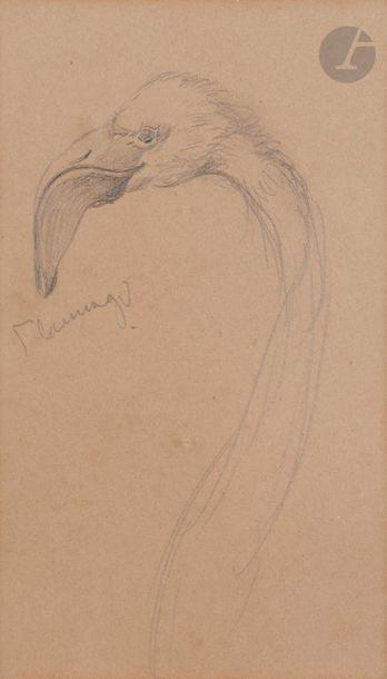 Attribué à John RUSKIN (1819-1900)  Flamant...