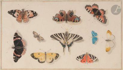 ÉCOLE DU NORD vers 1800 Papillons Aquarelle....