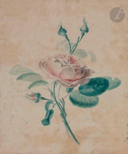 Jan Van DAEL (Anvers 1764 - Paris 1840) Étude de roses avec trois bourgeons Aquarelle...