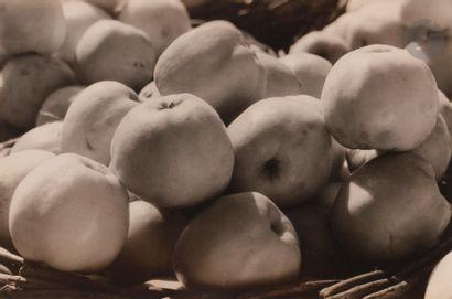 *Robert Diament (1907-1987) Pommes Antonovka,...