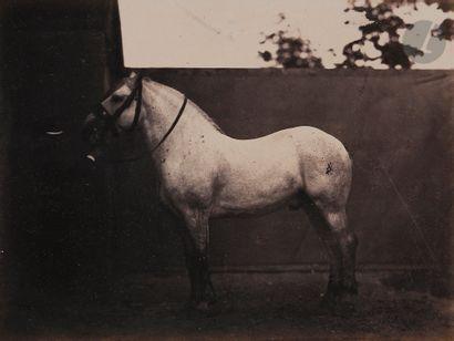 Adrien Tournachon, dit Nadar Jeune (1825-1903)...