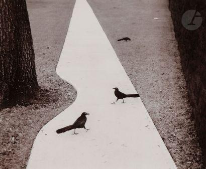 *Pentti Sammallahti (1950) Houston. Texas,...