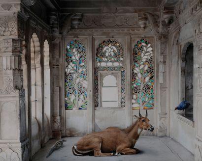 *Karen Knorr (1954) Série India Song, 2011....