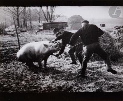 *Rimaldas Viksraitis (1954) Slaughter. Valakbudis,...