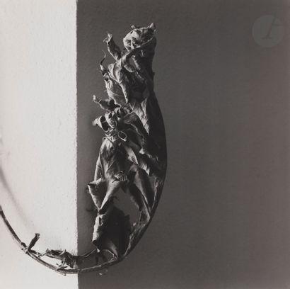 *Nanda Lanfranco (1935) Essi Sono, 1984....